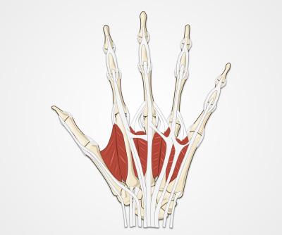 Wrist and Hand Examination