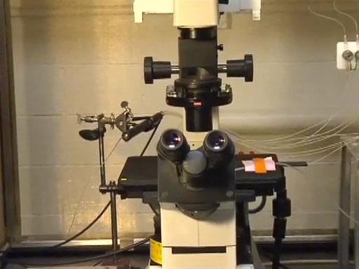 Introduction to Fluorescence Microscopy thumbnail