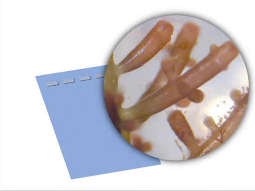 DNA Gel Electrophoresis thumbnail