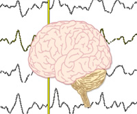 An Introduction to Neurophysiology thumbnail