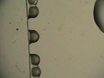 Microinjection of Zebrafish Embryos to Analyze Gene Function thumbnail