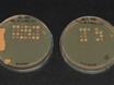 의 해부<em> Saccharomyces Cerevisiae</em> Asci thumbnail