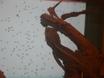 Testen visueller Sensibilität für die Geschwindigkeit und Richtung der Bewegung in Lizards thumbnail