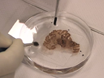 Batch Immunokleuring Grootschalige eiwitdetectie in de Whole Brain Monkey thumbnail