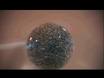 פקטור מצופה צמיחה השמה ביד על Explants forebrain הגבי thumbnail
