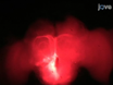 <em>In vivo</em> Ca <sup>2 +</sup> - Imaging di neuroni Corpo funghi durante l&#39;apprendimento olfattivo nel Honey Bee thumbnail
