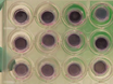 An <em>In Vitro</em> Skin Irritation Test (SIT) using the EpiDerm Reconstructed Human Epidermal (RHE) Model thumbnail