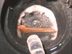 Using the Horseshoe Crab, <em>Limulus Polyphemus</em>, in Vision Research thumbnail