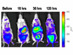 Bioluminescence Imaging of Heme Oxygenase-1 Upregulation in the Gua Sha Procedure thumbnail