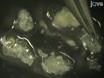 Isolamento e purificação de<em> Drosophila</em> Neurônios periféricos por classificação Bead Magnética thumbnail