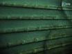 성인 Zebrafish에서 레트로 - 궤도 분사 thumbnail