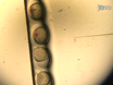 Live Imaging of Cell Motility and Actin Cytoskeleton of Individual Neurons and Neural Crest Cells in Zebrafish Embryos thumbnail