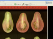 Tomato Analyzer: A Useful Software Application to Collect Accurate and Detailed Morphological and Colorimetric Data from Two-dimensional Objects thumbnail