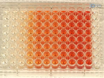 A 96 Well Microtiter Plate-based Method for Monitoring Formation and Antifungal Susceptibility Testing of <em>Candida albicans</em> Biofilms thumbnail