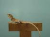 计算机生成的动物模型的刺激 thumbnail