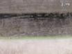 <em>Arabidopsis thaliana</em> Polar Glycerolipid Profiling by Thin Layer Chromatography (TLC) Coupled with Gas-Liquid Chromatography (GLC) thumbnail