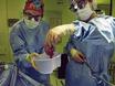 免疫学的メカニズム深部臓器移植の拒絶反応の調査 thumbnail