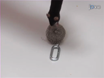 Measuring the Strength of Mice thumbnail