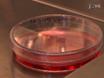 La medición de la cinética de la transcripción de ARNm en las células vivas solo thumbnail
