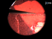 의 형태학의 스케일링 관계를 추정 바디 크기의 실험 조작<em> Drosophila</em thumbnail