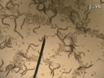 RNAi-vermittelte Gene Knockdown und Transgenese durch Mikroinjektion in die Necromenic Nematode<em> Pristionchus pacificus</em thumbnail
