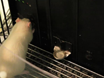 A Fully Automated and Highly Versatile System for Testing Multi-cognitive Functions and Recording Neuronal Activities in Rodents thumbnail