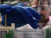 Purificação e visualização de lipopolissacarídeo de bactérias Gram-negativas por extracção aquosa de fenol-Hot thumbnail