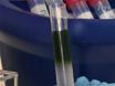 一个协议,用于基于蛋白质 - 蛋白质相互作用的鉴定<sup&gt; 15</sup&gt; N代谢标记,免疫沉淀法,的定量质谱法和亲和调制 thumbnail