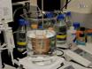 <em>In Vitro</em> Analysis of PDZ-dependent CFTR Macromolecular Signaling Complexes thumbnail