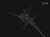 Neural Explant Cultures from <em>Xenopus laevis</em> thumbnail