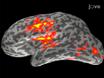 मानचित्रण Cortical युगपत एमईजी / ईईजी और Anatomically विवश न्यूनतम आदर्श अनुमान का उपयोग गतिशीलता: एक श्रवण ध्यान उदाहरण thumbnail