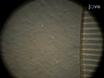 Análisis de imágenes de Neuron a la interacción glía en la Plataforma Cultura Microfluidic (MCP)-basada en Axón Neuronal y Sistema Glia Co-cultura thumbnail