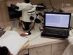 La evaluación no invasiva de la función endotelial microvascular y thumbnail