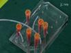 Isolamento privo di etichetta e di arricchimento delle cellule attraverso Contactless dielettroforesi thumbnail