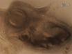 El método de cultivo de la rebanada por Siguiendo desarrollo de gérmenes de dientes en Explante Cultura thumbnail