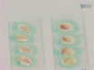 <em>In vivo</em> Reprogramming of Adult Somatic Cells to Pluripotency by Overexpression of Yamanaka Factors thumbnail