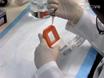 דור מהיר של עמילואיד מחלבונים שפת אם<em&gt; במבחנה</em thumbnail