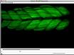 Sample Drift Correction Following 4D Confocal Time-lapse Imaging thumbnail