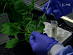Identification of Post-translational Modifications of Plant Protein Complexes thumbnail