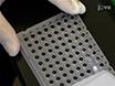Profiling Individual Human Embryonic Stem Cells by Quantitative RT-PCR thumbnail