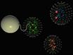 Ett-trinns Rensing av Twin-streptokokk-merket Proteiner og deres Komplekser for streptokokk-Tactin Resin tverrbundet Med Bis (sulfosuccinimidyl) suberat (BS3) thumbnail