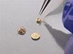 Fundamental elementos técnicos de Freeze-fractura / Freeze-grabado en Biológica Microscopía Electrónica thumbnail