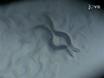 A Protocol to Infect <em>Caenorhabditis elegans</em> with <em>Salmonella typhimurium</em> thumbnail