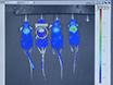 Cerenkov Luminescence Imaging of Interscapular Brown Adipose Tissue thumbnail