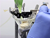 Measuring Fluxes of Mineral Nutrients and Toxicants in Plants with Radioactive Tracers thumbnail
