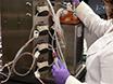 使い捨て空気圧バイオリアクターシステムを使用して、哺乳動物細胞の培養 thumbnail