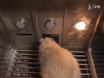Operant Procedures for Assessing Behavioral Flexibility in Rats thumbnail