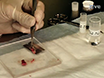 Demonstration of the Rat Ischemic Skin Wound Model thumbnail