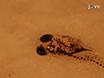 Electroretinogram Analysis of the Visual Response in Zebrafish Larvae thumbnail