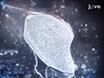 И что нельзя делать в подготовке мышц криосрезы для гистологического анализа thumbnail